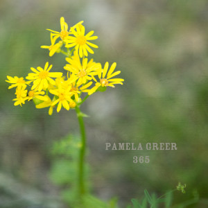 Pamela Greer 365
